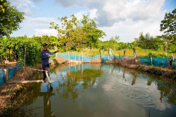 Fisk, Cambodja, sø