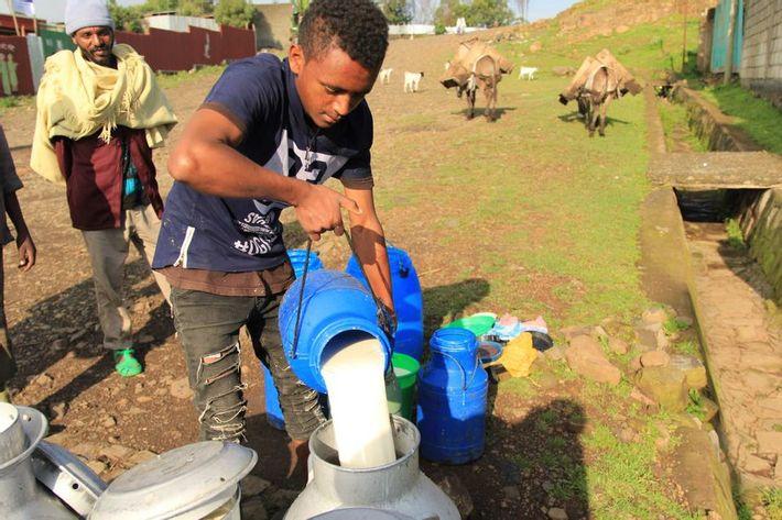 Yoghurt produktion i Etiopien