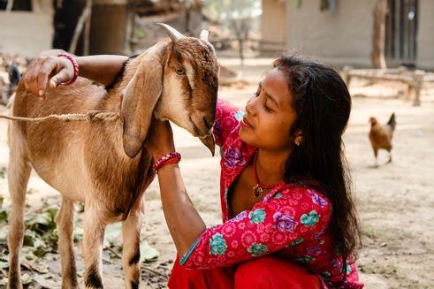 Kvinde med ged i Nepal